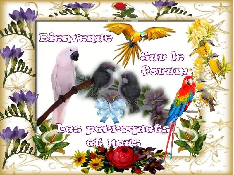 les perroquets et nous