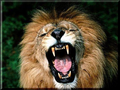 lion1110 dans LION