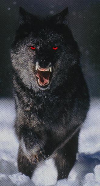 La meute d'Etoile. Les loups de la nuit.
