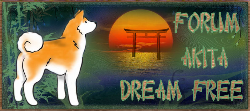Akita Dream Free