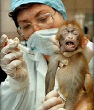 L'UE continue de lutter pour la réduction des expérimentations animales