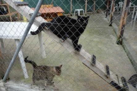 f association chats sur le toit aide aux chats sdf. Black Bedroom Furniture Sets. Home Design Ideas