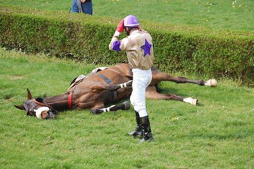 Chevaux de course meurent chaque semaine sur les pistes - Course de chevaux table de multiplication ...