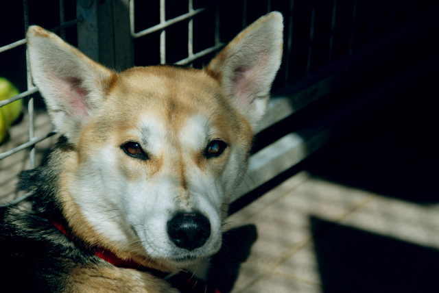 Citations de chienne maigre