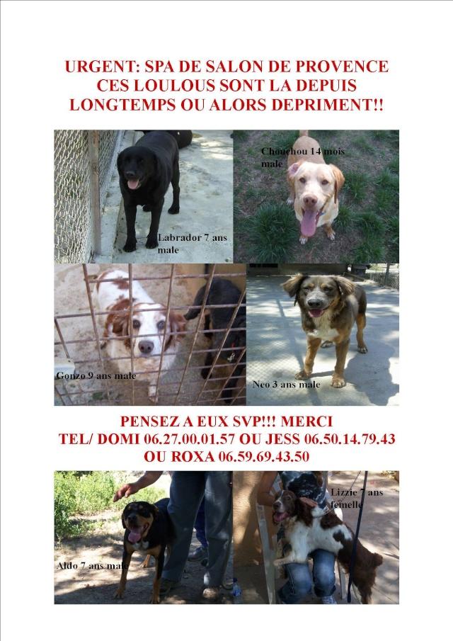 13 grosse urgence spa salon des chiens en grand nombre for Salon des chiens