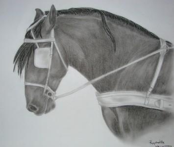 Dessins fusains et mine graphite le blog de kiwi - Dessin cheval de trait ...