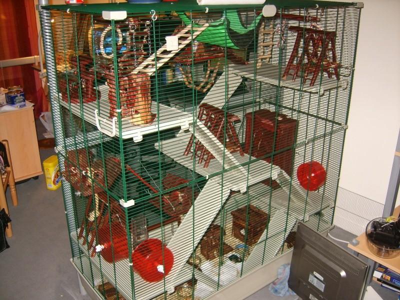 A tous ceux qui continuent de croire qu 39 une cage a souris est adapt e pou - La plus grande cage a hamster du monde ...