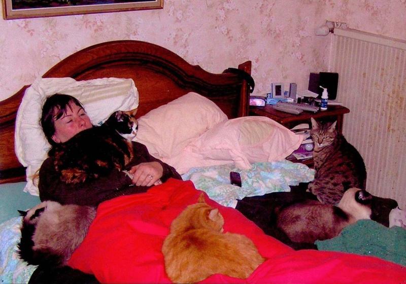 Les chats ne font pas des chiens mamanchats - Les chiens ne font pas des chats ...