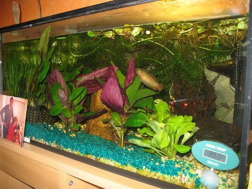 aquarium pour tortue d eau pas cher