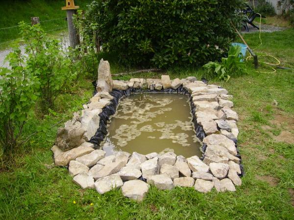 Plantes de bassin ext rieur trouvez le meilleur prix sur for Bassin exterieur pour tortue de floride