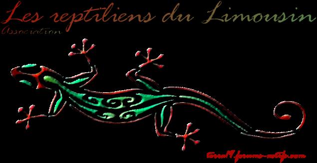 TERRA19 - Les Reptiliens du Limousin