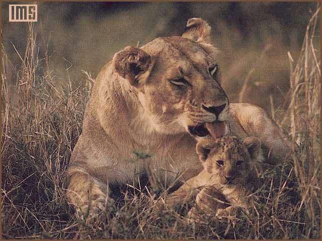 lion110