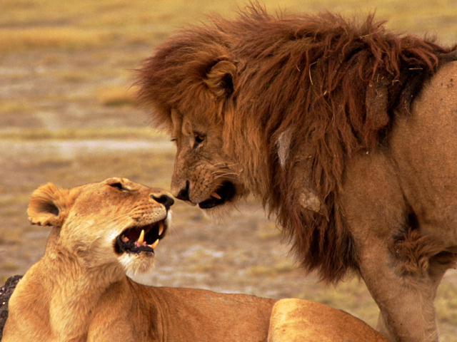 lion2010
