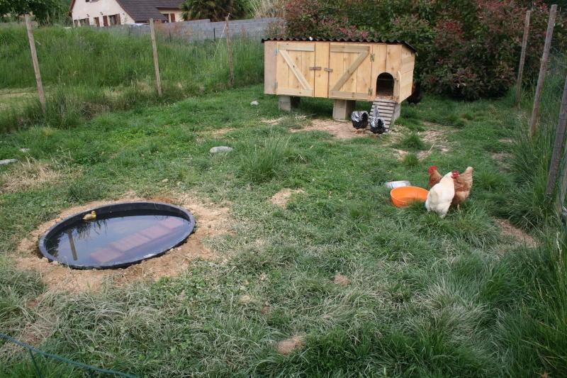 Notre petit coin de bonheur dans le jardin - Petit bassin plastique villeurbanne ...