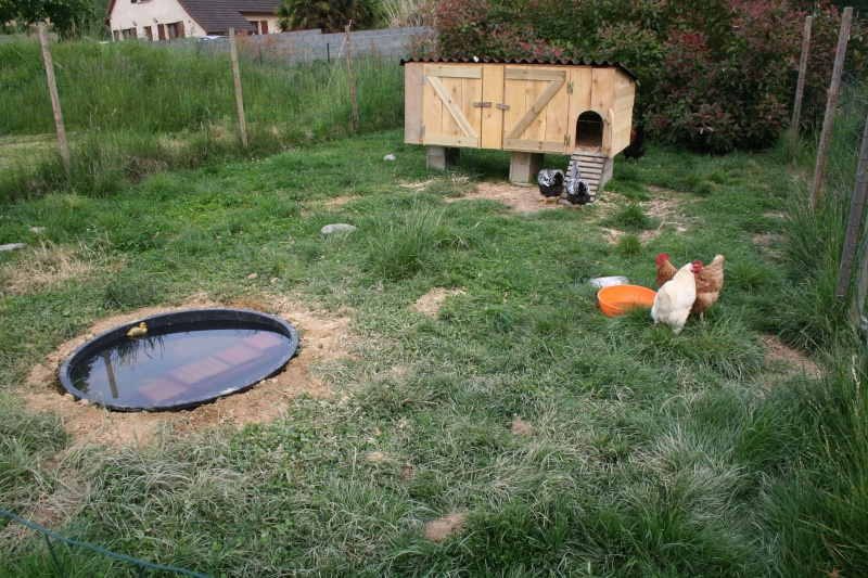 Petit bassin plastique villeurbanne maison design - Mobilier jardin waterloo villeurbanne ...
