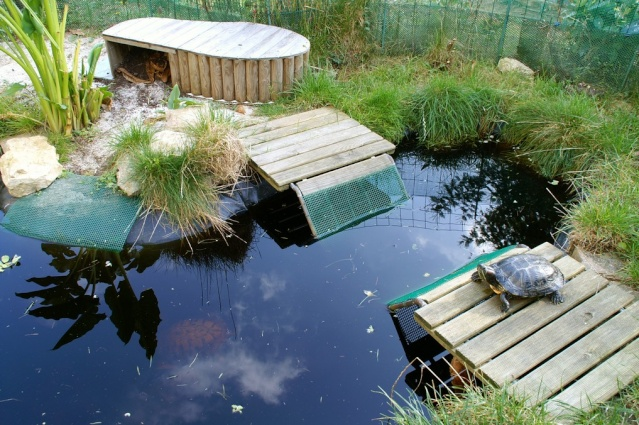Awesome bassin de jardin tortue pictures design trends for Creer bassin poisson