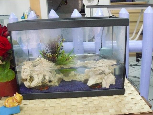 aquarium eau douce crabe