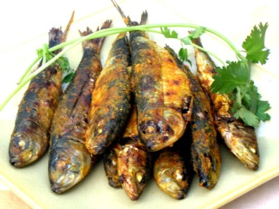 sardin15
