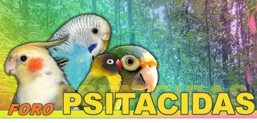 FORO DE PSITACIDAS