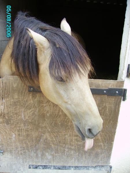 mon poney préféré 1567710