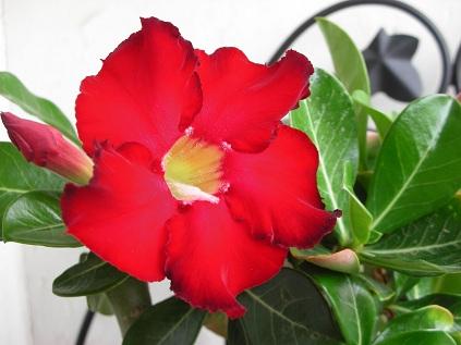 Fleurs balcon plein soleil