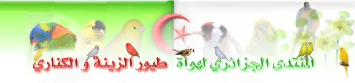 منتدى طيور الكناري الجزائري