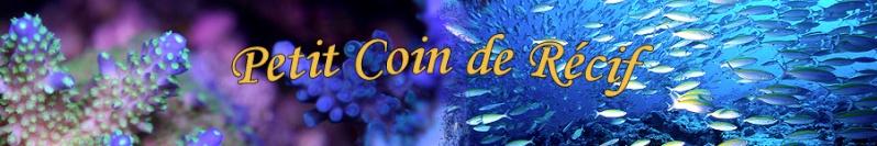 1er forum d'aquariophilie marine et récifale en Brabant Wallon