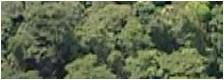 http://i40.servimg.com/u/f40/12/30/09/00/foret10.jpg