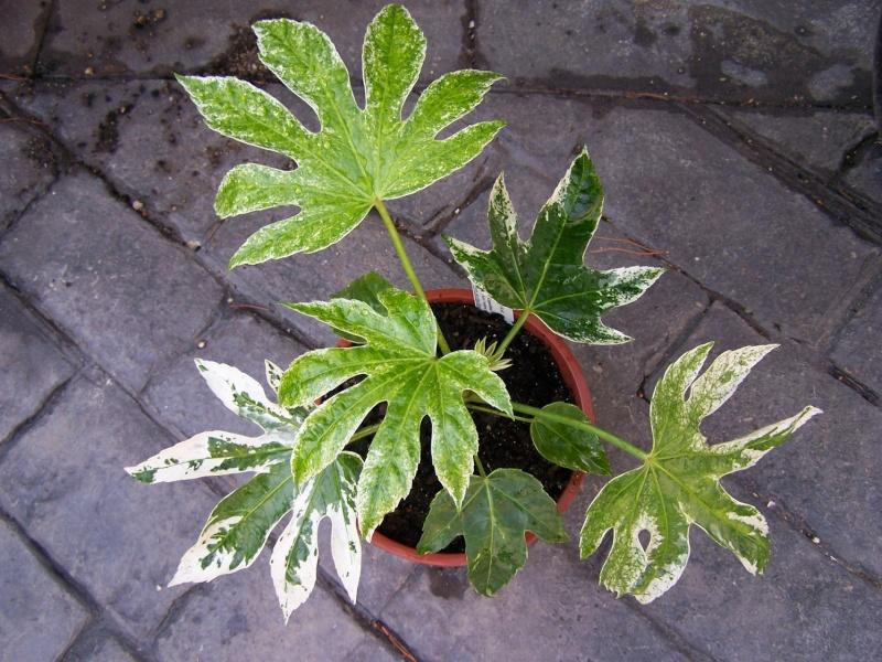 Foires aux plantes rares et de collection en belgique page 1 for Plantes belgique