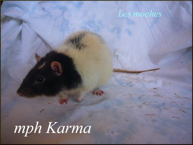 karma10.jpg