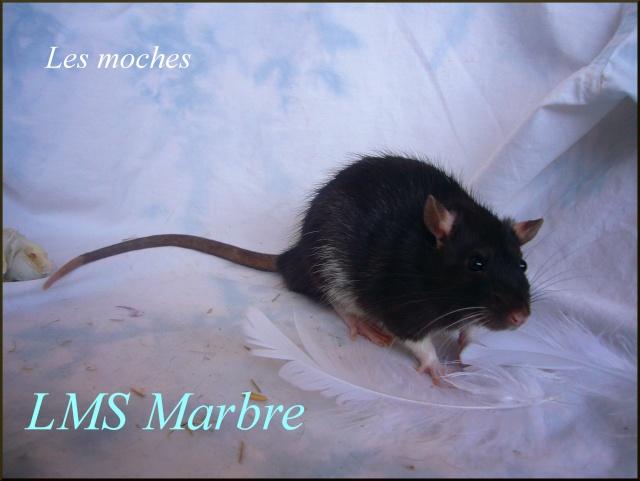 marbre10.jpg