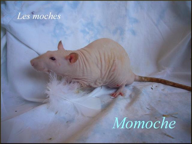 momoch10.jpg