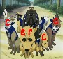 Cerca