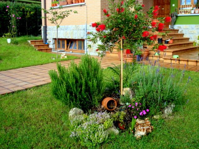 Plantas y arbolitos de mi jardin p gina 2 - Arbolitos para jardin ...