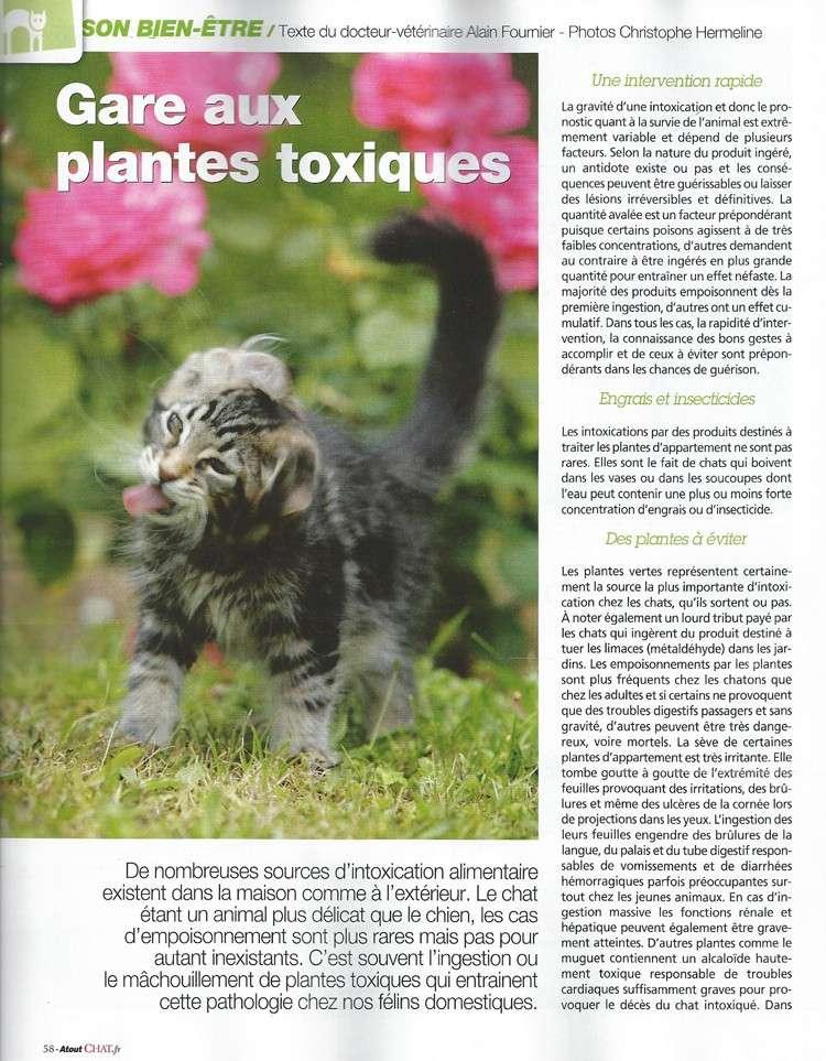 Les plantes toxiques pour nos matous - Plantes non toxiques pour les chats ...