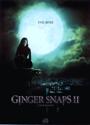 Saga Ginger Snaps