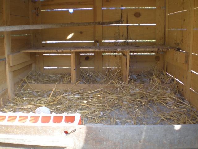 Pondoirs poules trouvez le meilleur prix sur voir avant for Interieur poulailler