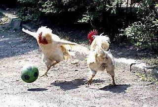 poulet10.jpg