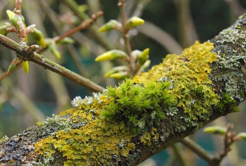 Mousse et lichen rev tements modernes du toit - Mousse sur les arbres ...