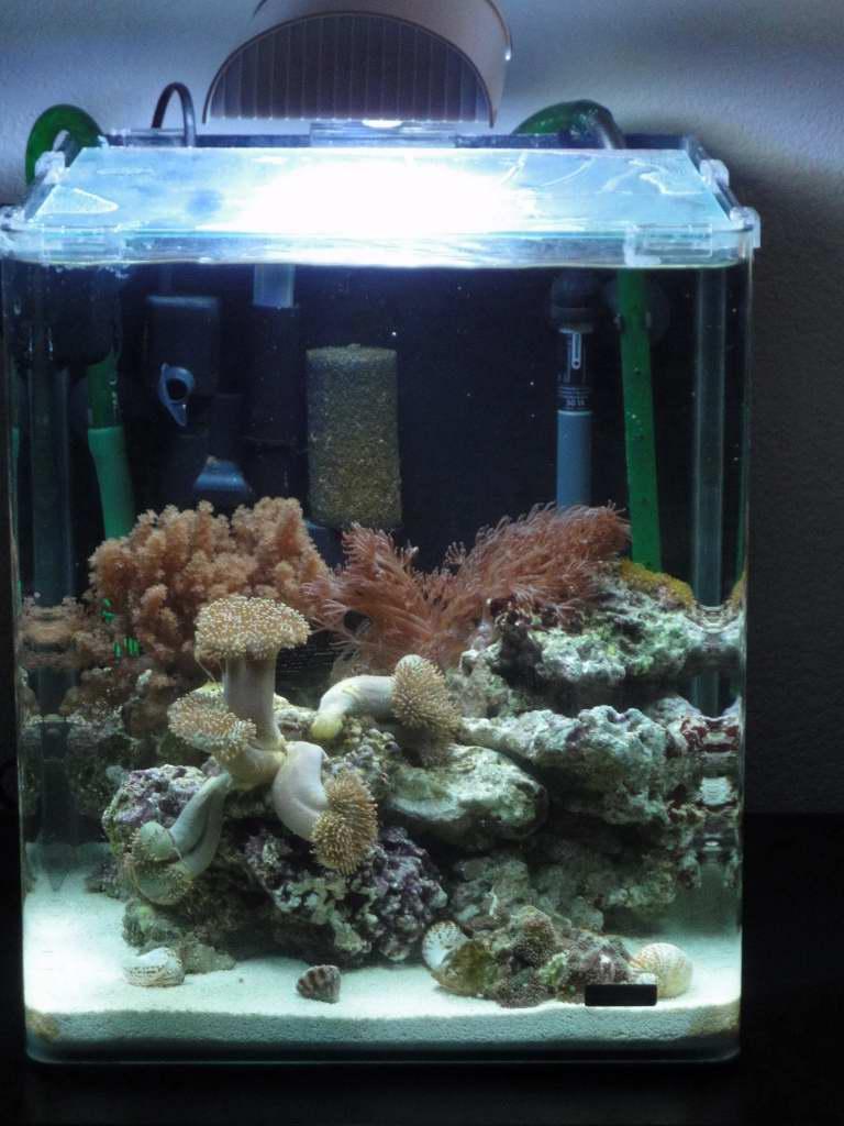 Vend aquarium nano marinus comme neuf 77 for Vend aquarium