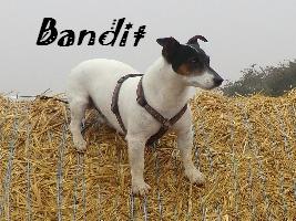 bandit10.jpg