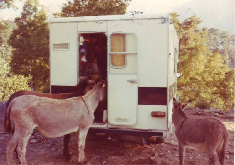notre 1er amour de camping