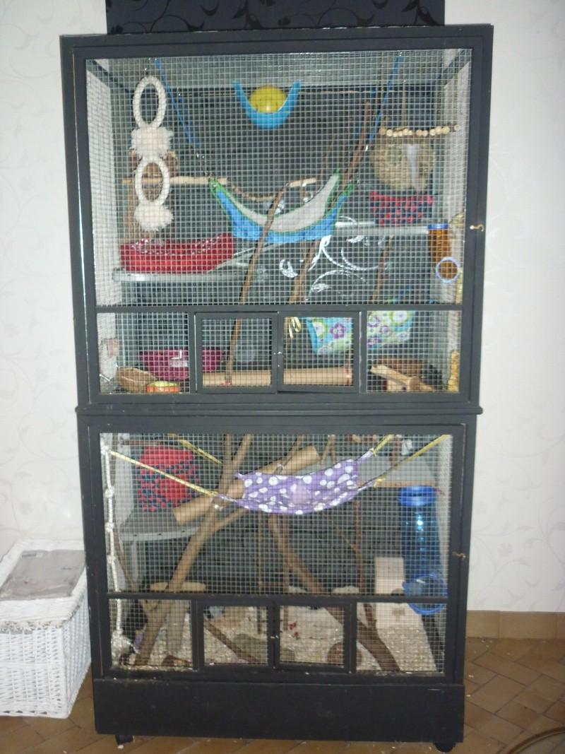 D but de r fl xion de construction d 39 une cage - Cage a rat pas cher ...