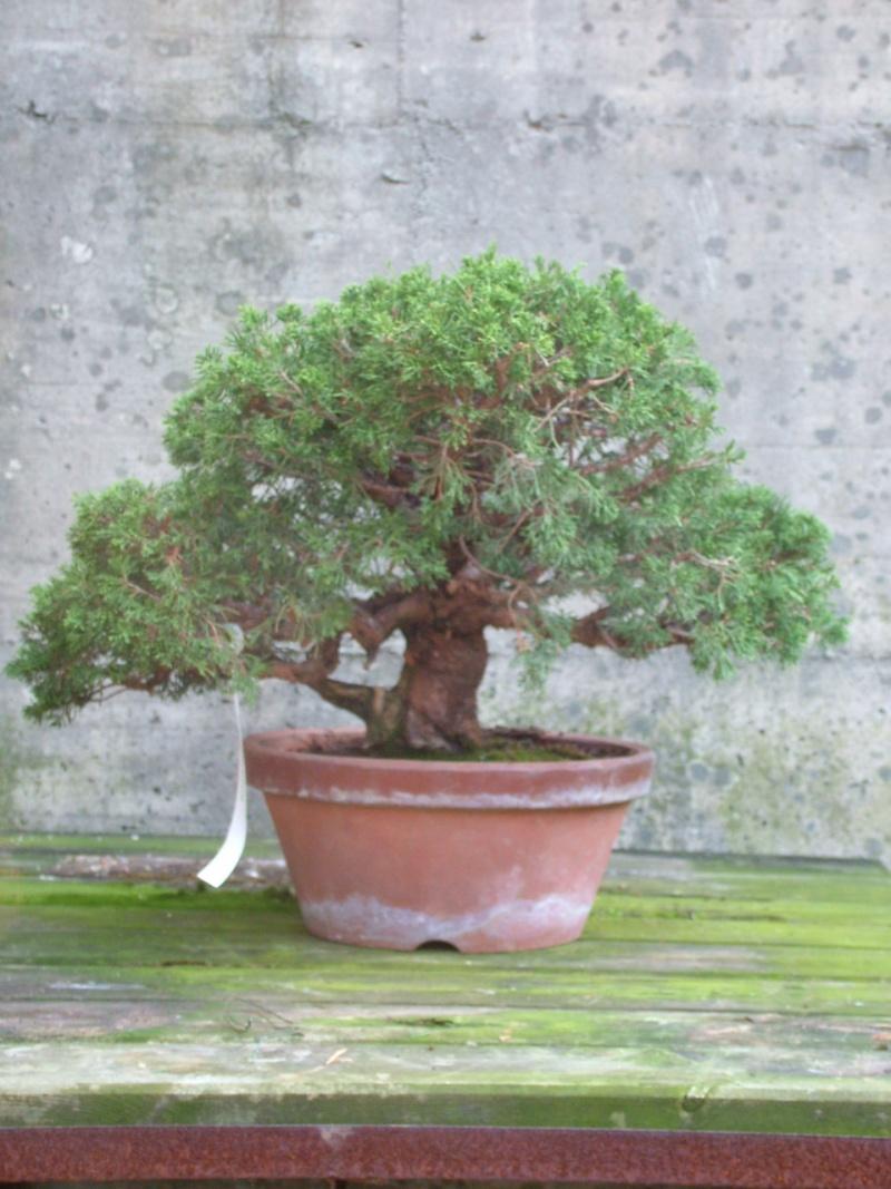 Furto bonsai al centro crespi di parabiago for Tipi di bonsai