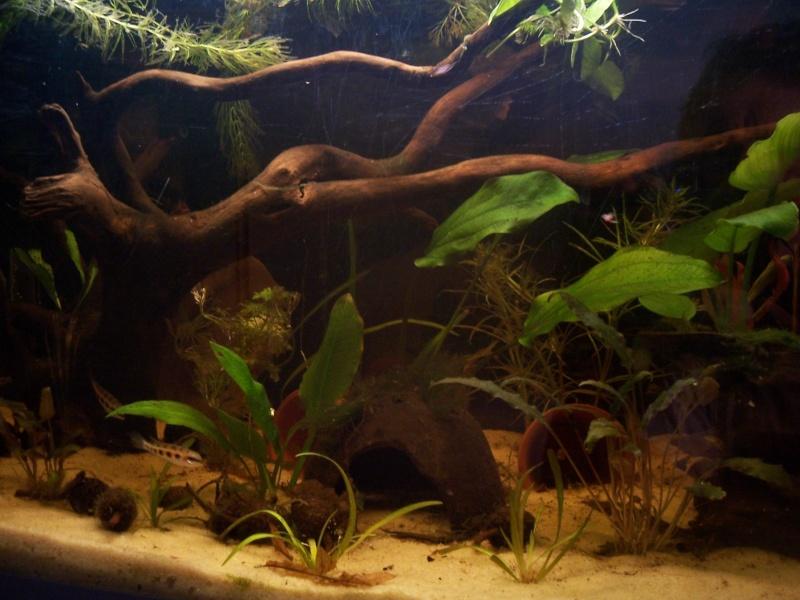 Les racines de mangrove for Racine aquarium