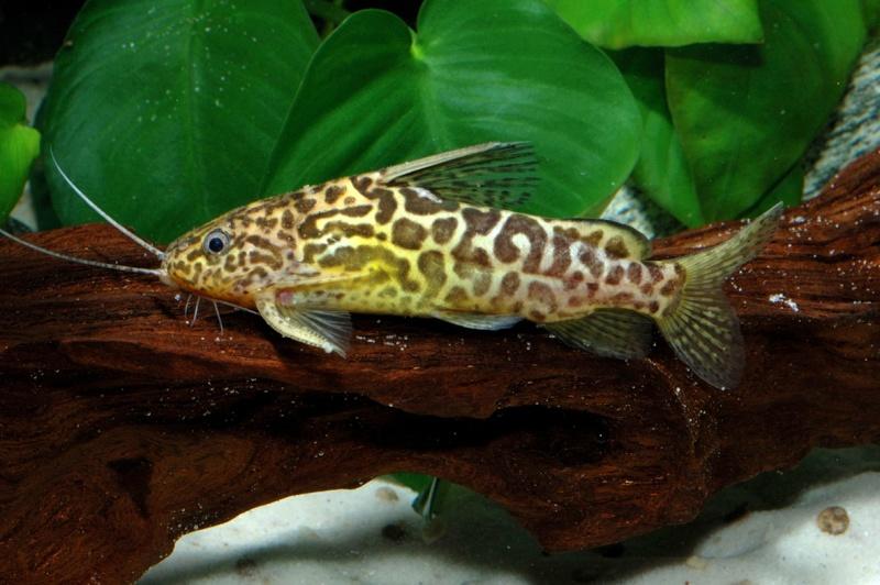 Top Les différents poissons d'Afrique de l'Ouest et du Congo CJ05