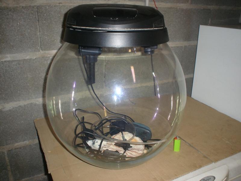 Aquarium boule ideal nano pour crevette ou petit poisson for Bulleur pour aquarium boule