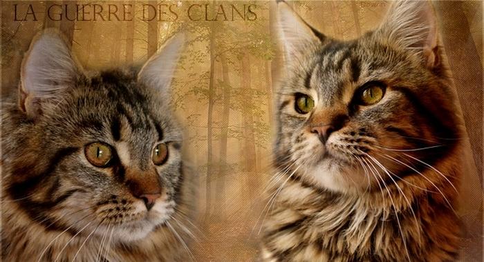 ♥La Guerre des Clans♥