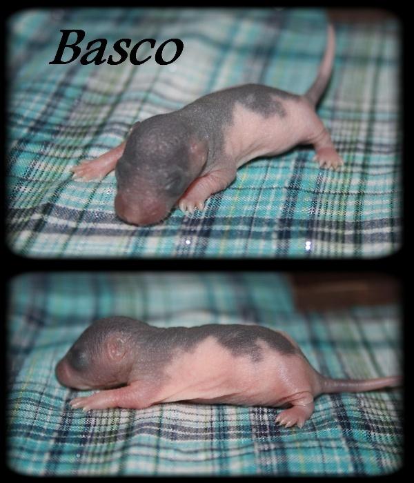 basco10.jpg