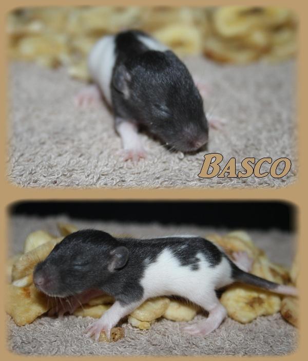 basco12.jpg